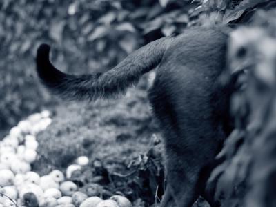 Dietråd vid kräkning och diarré hos hund