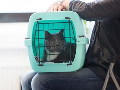 Tierarztbesuch mit Katze