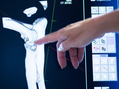 Artroscopia en los hospitales veterinarios AniCura