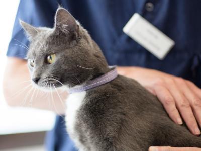 Vacunación de gato veterinarios AniCura