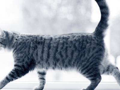 Katze humpelt
