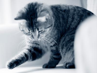 Niereninsuffizienz Katze