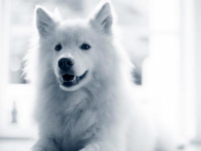 Zahnsanierung Hund
