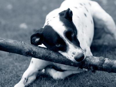 Kreislaufkollaps Hund