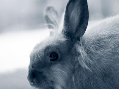 Vacunación de conejo en los centros veterinarios de AniCura