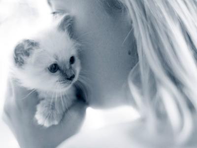 Katze miaut staendig