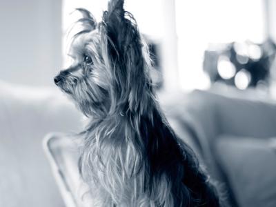 Forskellige pelstyper hos hund