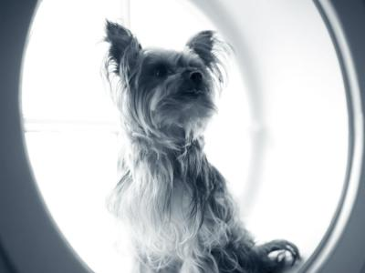 Främmande kropp i ögat på hunden