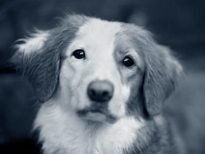 Hund Unfall