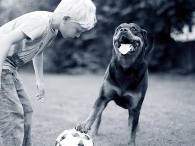 hond kind spelen