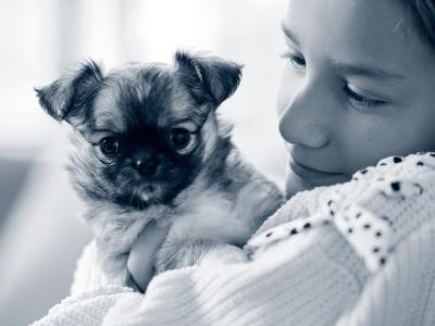 puppy consult dierenarts