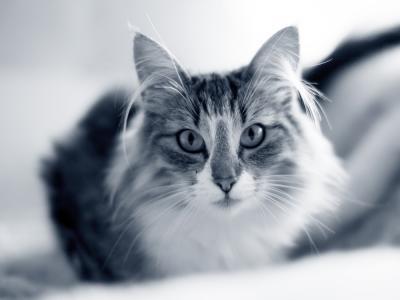 Bloeddrukmeting hond of kat
