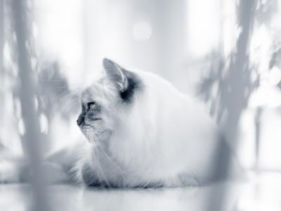 kat en profile