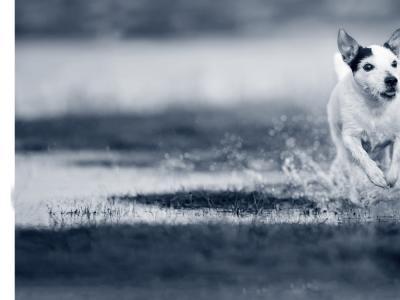 hond water