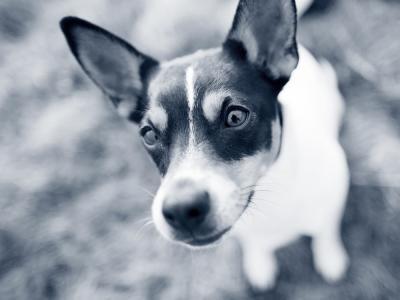 hond ogen