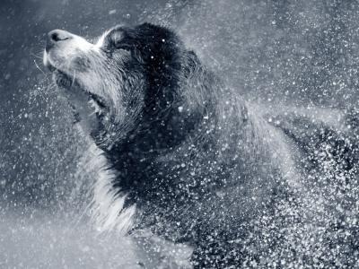 Hond zwemmen uitschudden