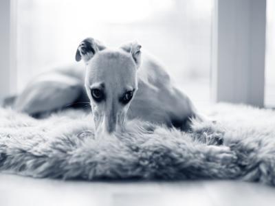 Hond stinkt uit bek: