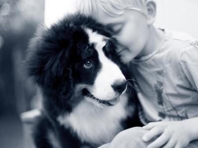 Ingeente hond met jongen