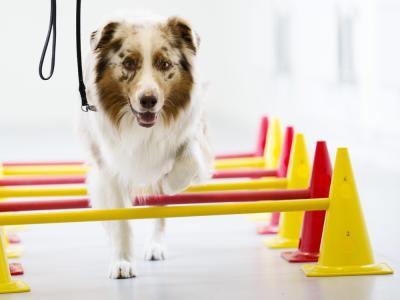 hond dierfysiotherapie