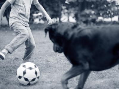 hond met HD