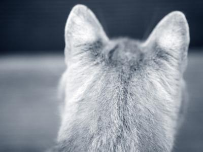 kattenkop oren