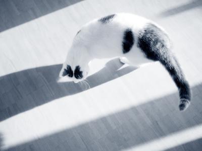 kat en schaduw