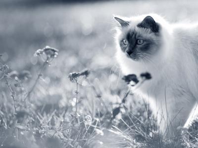 kat vacht