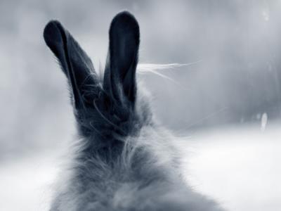 oren konijn