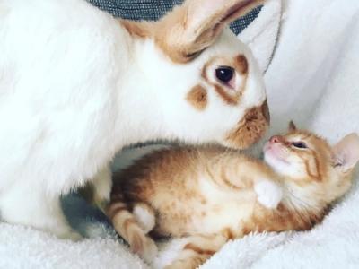 konijnenkopje