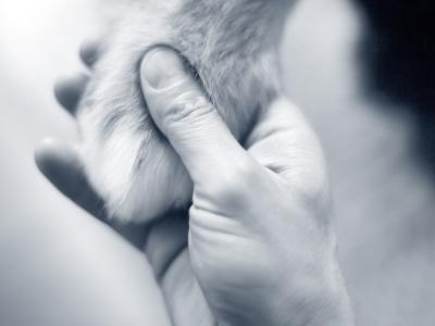 hand en poot