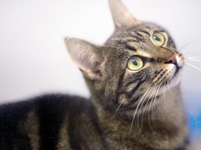 Kat kijkt omhoog kattenpension