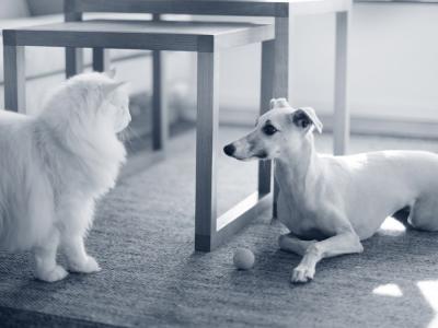 hond kat spelen