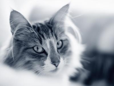 kat kijkt chagrijnig