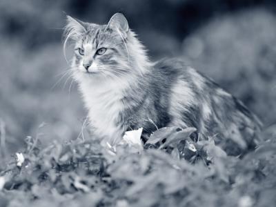 Niesziekte kat