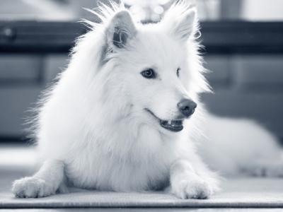 Hond anaalklieren ontsteking
