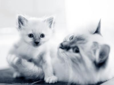 kitten poes