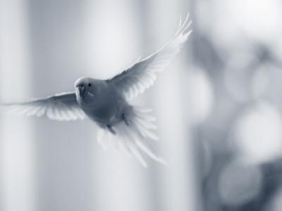 vogelzorg