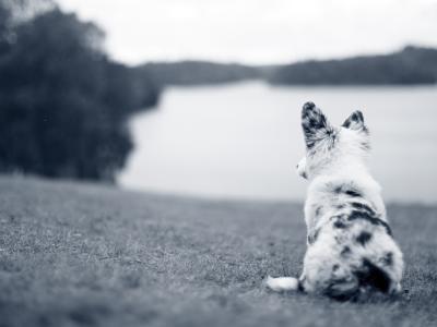 hond strand