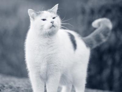 kat neus in de lucht