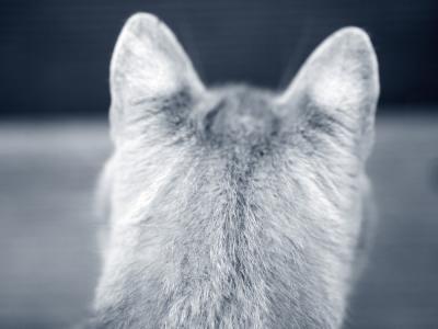 kattenhoofd
