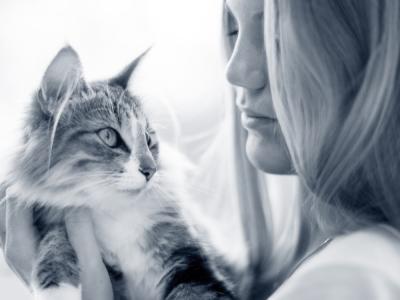 kat vasthouden