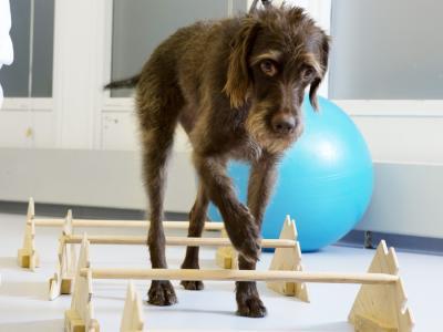 hond revalidatie