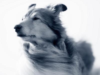 Hond haren in de wind