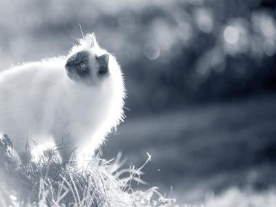 kat die mank loopt buiten