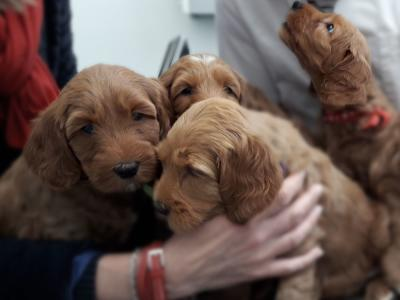 Pasgeboren puppies