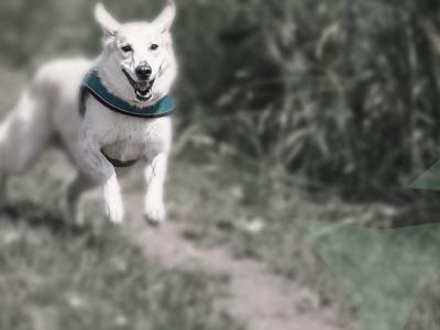 hond rennen bos hd onderzoek hond