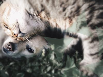 kat en hond castratie sterilisatie