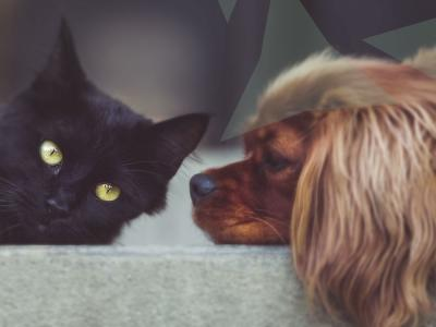 kat en hond hormoonanalyse