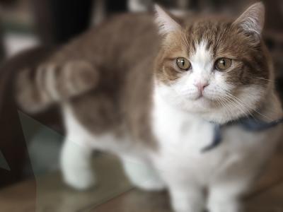 euthanasie bij uw kat