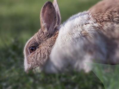 konijn gras